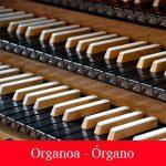 Organoa - Órgano